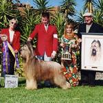 Am Can Ch Deja Vu In Like Flynn CD PT winning his second National specialty-this is the first he won from the veteran's class. He won a total of 4 Nationals, 3 were from the veteran dog class and the last one was when he was 11 years old.