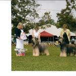 Udo winning the Michigan Ohio Specialty with son Smokey and daughter Maggie Winners Dog and Winners Bitch