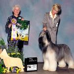 Udo winning his first specialty at almost 2 years old shown by our friend Pat Murray under Herding dog authority Mrs Nancy Smith.