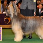 Udo Best of Breed at Westminster