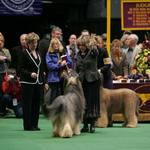 Udo winning the breed at Westminster