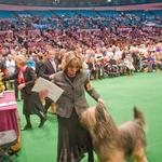 Udo winning Best of Breed at Westminster